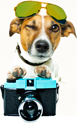Dog photographer